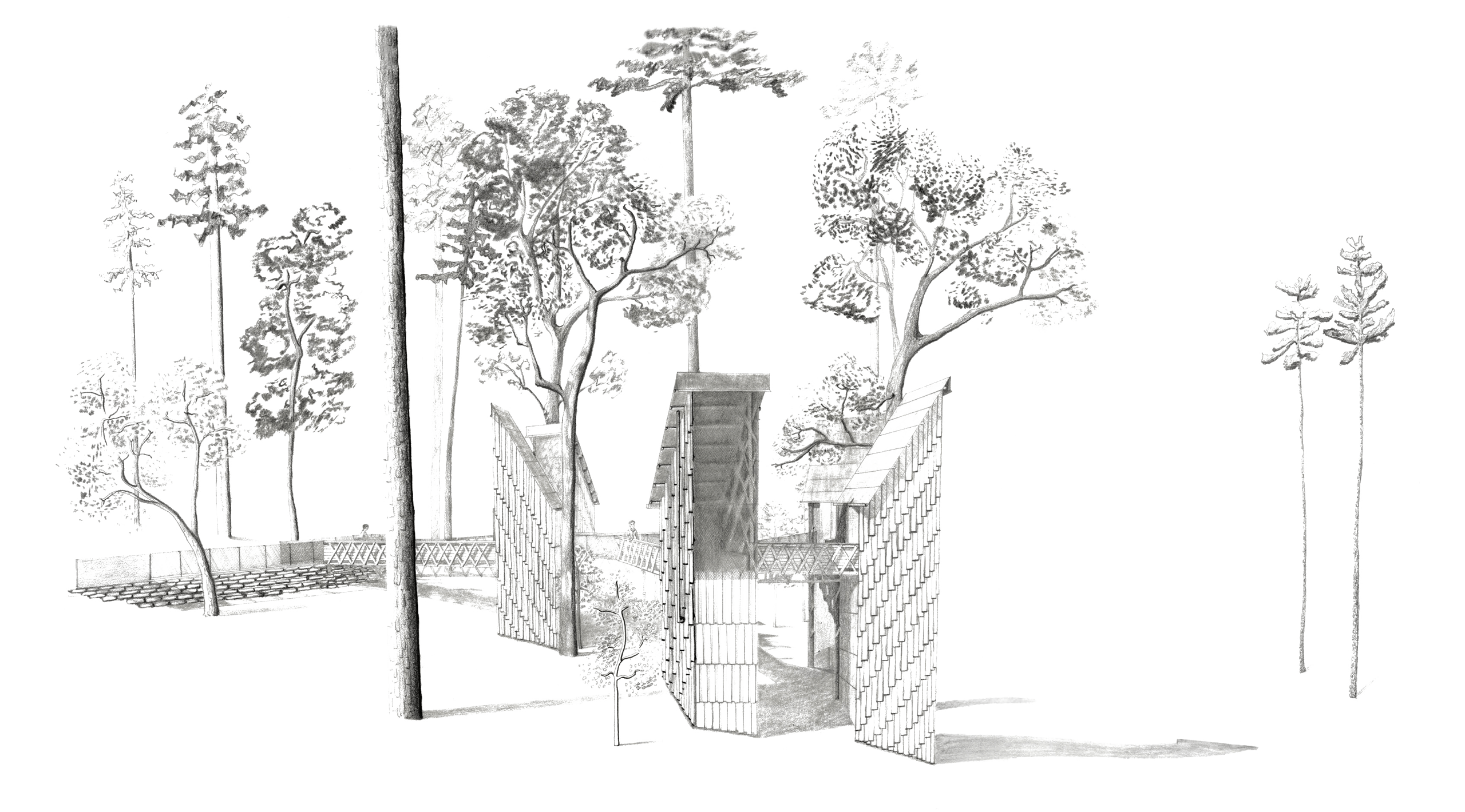 graphite perspective sketch of thinnings bathhouse amongst trees