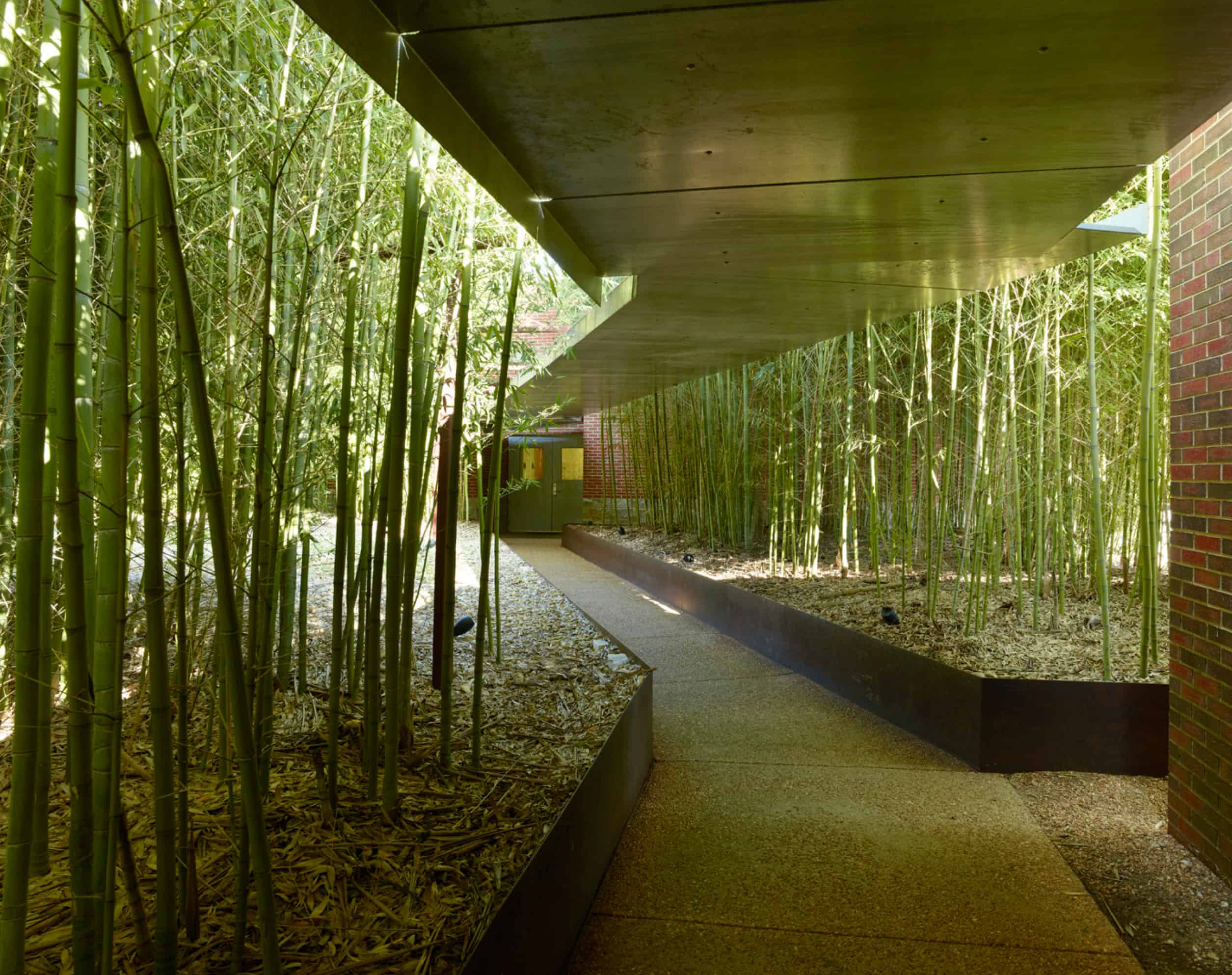 bamboo garden with walkway between buildings
