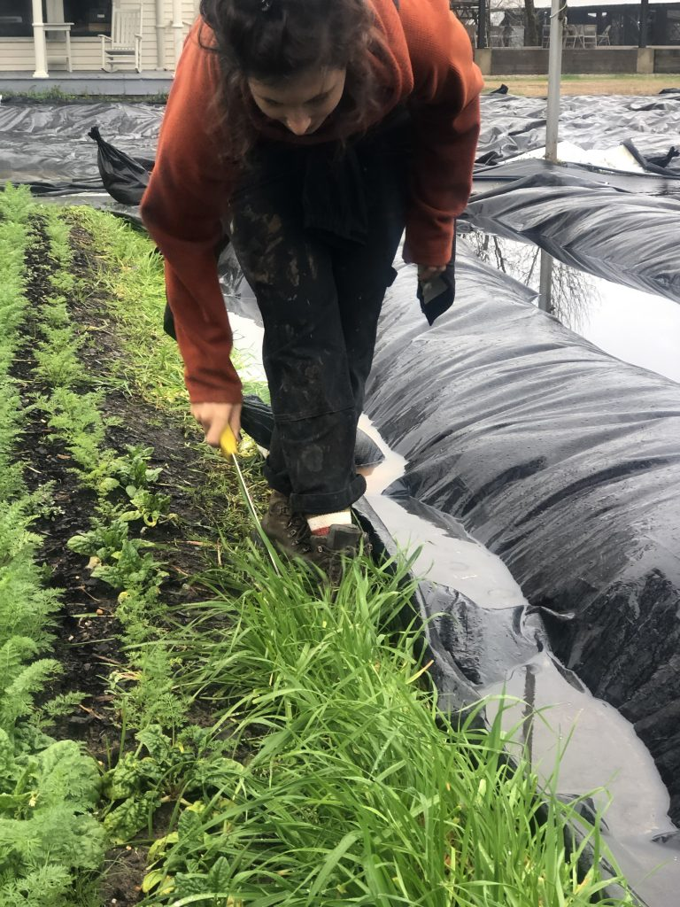 A student cuts back encroaching cover crops
