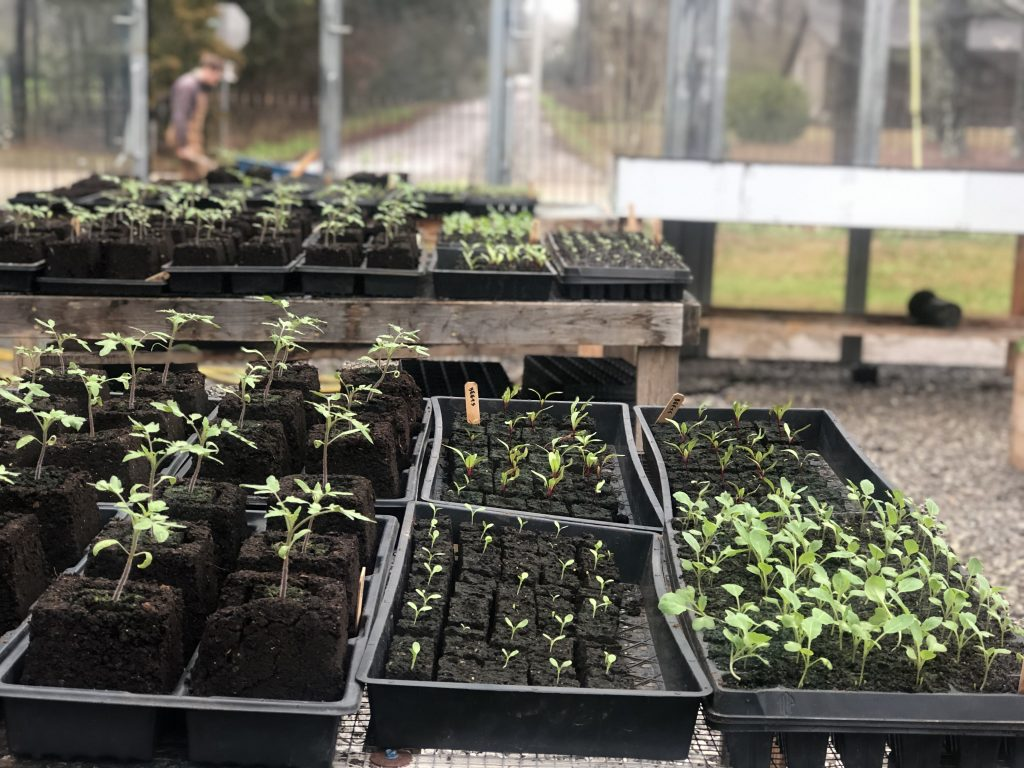A view of new seedlings in trays in the seed house