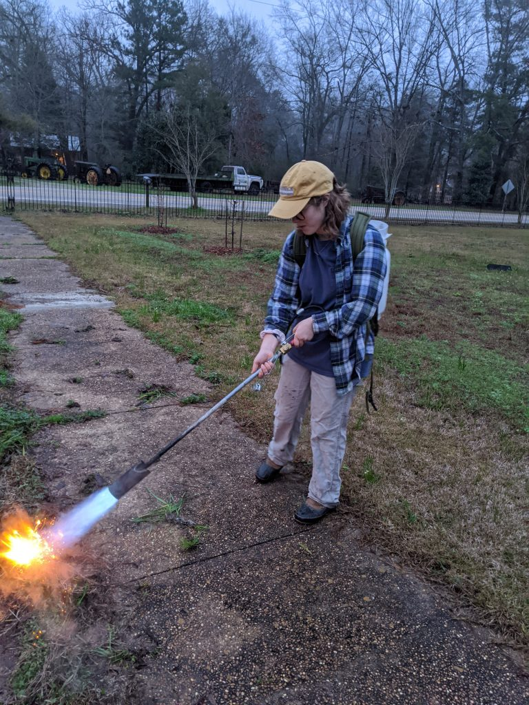 A student uses a flame weeder