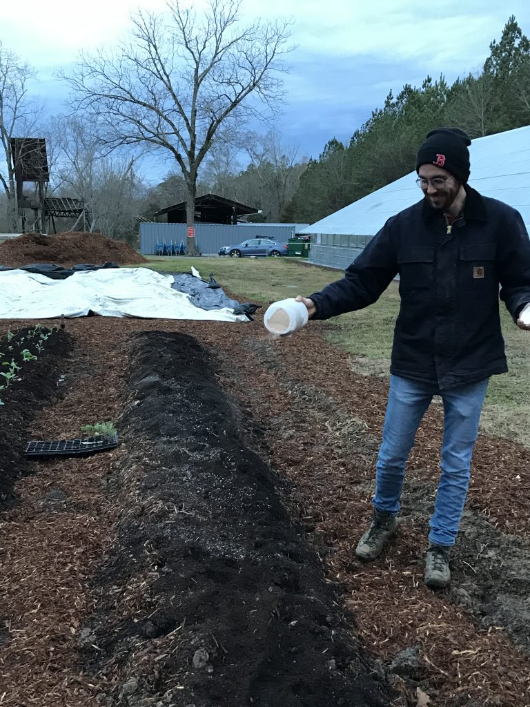 Student adding soil amendment to farm beds