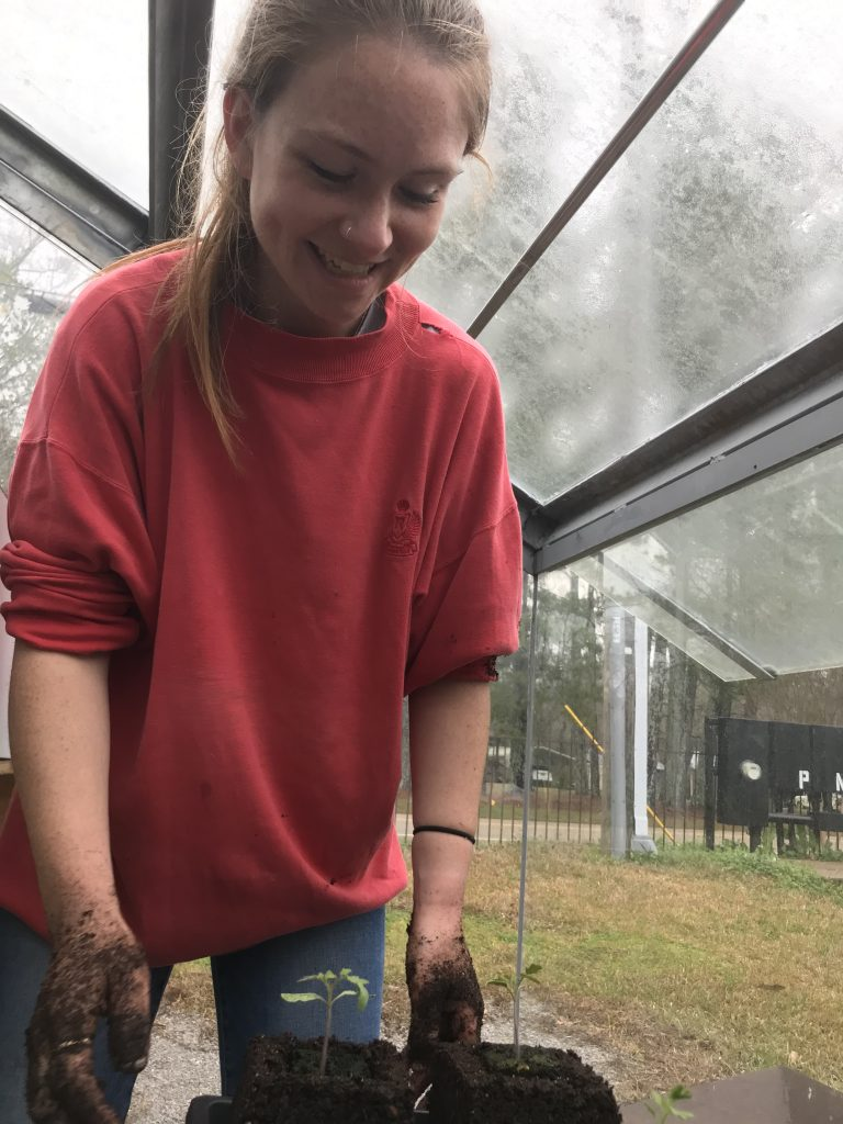 Student transplanting tomato soil block