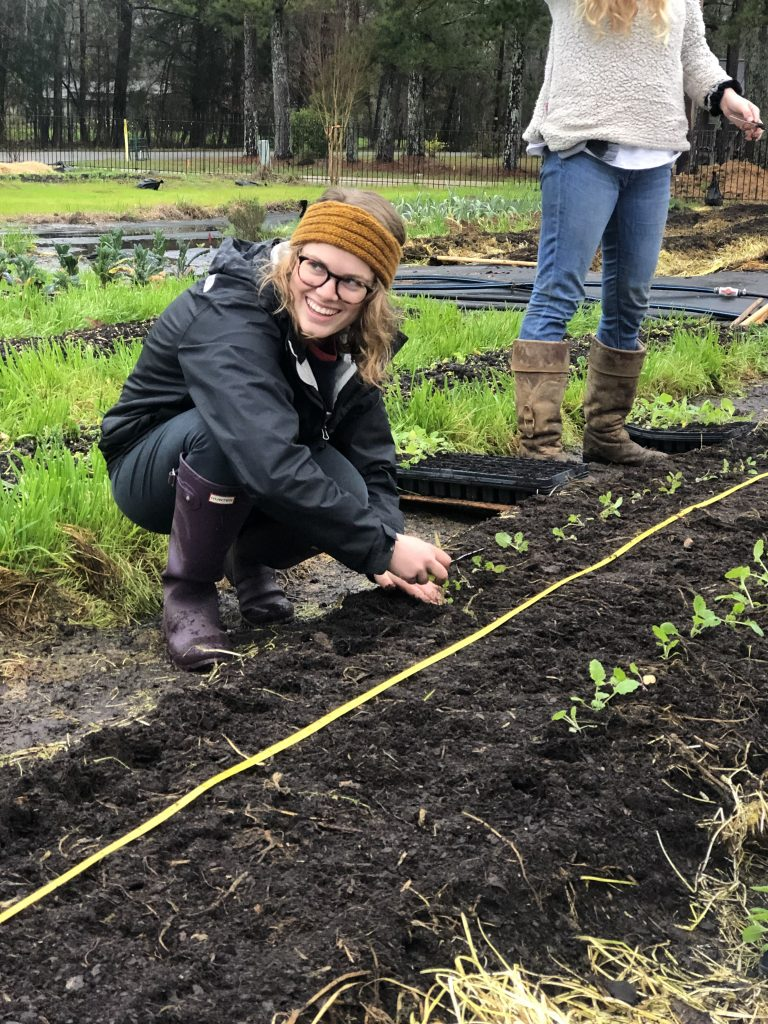 A student places turnip seedling into transplant hole