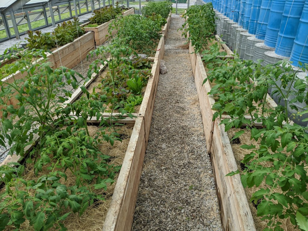 A wide shot of plants growing in the greenhouse