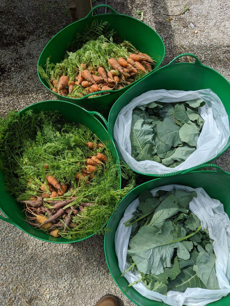 Several harvested crops sit in large harvest tubs