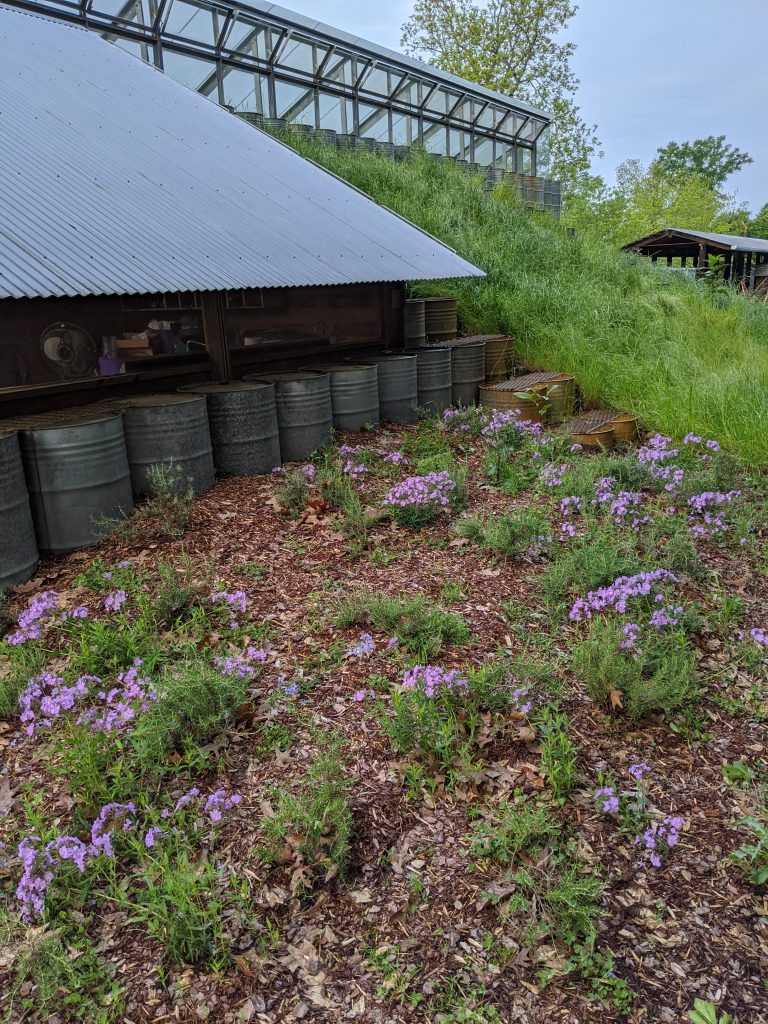 Flowers bloom on a small berm off the solar greenhouse