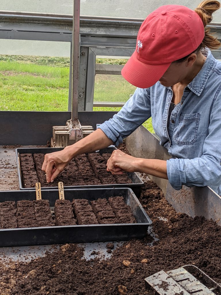 A professor plants seeds into prepared soil blocks