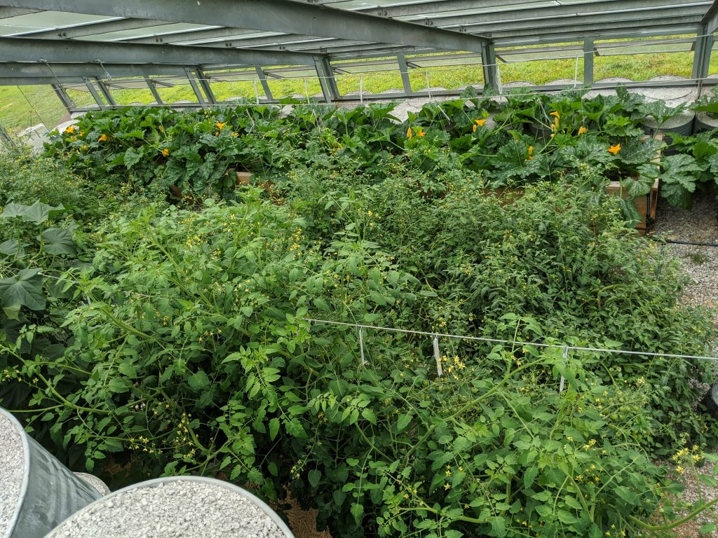 An overhead shot of the east half of the greenhouse, highlighting the various plants