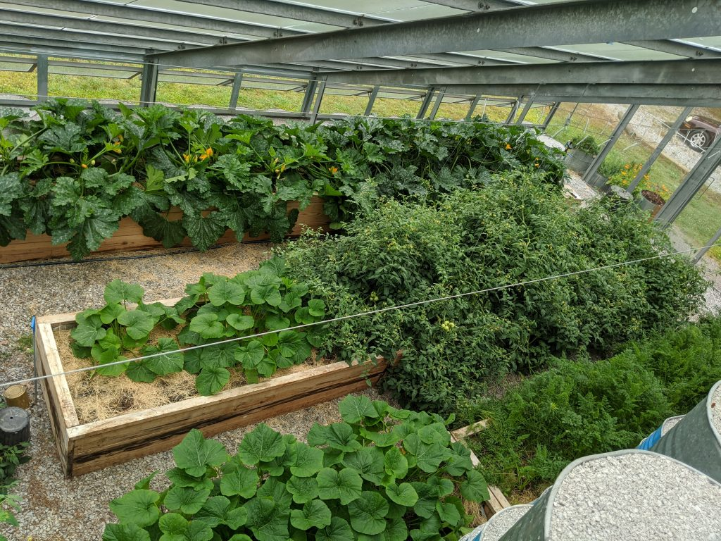 An overhead shot of the west half of the greenhouse, highlighting the various plants