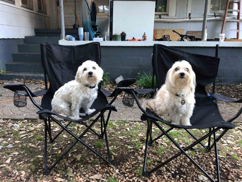 two twin small white dogs sitting in two folding lawn chairs