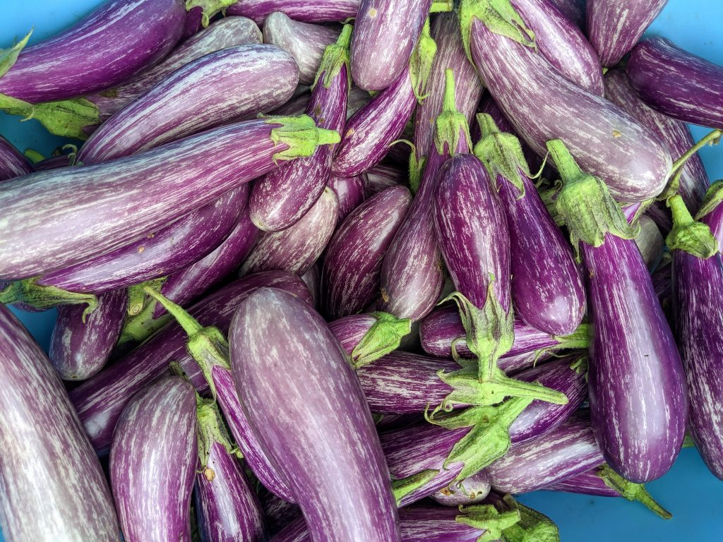 A close-up of harvested mini eggplants