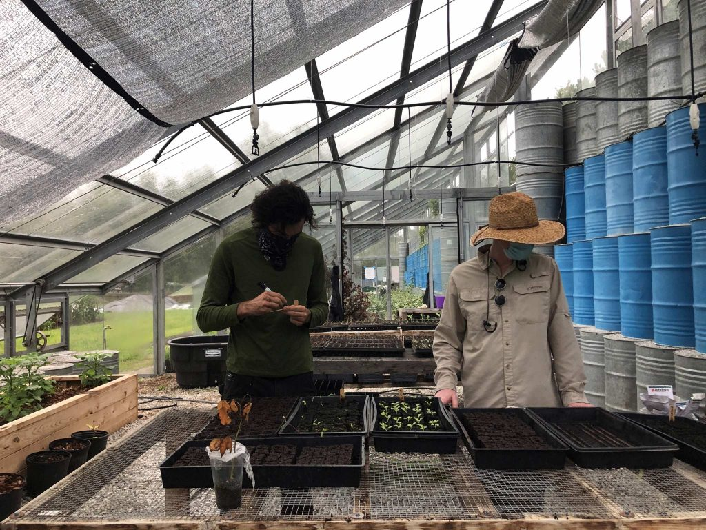 Two workers examine some seed trays