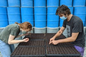 Two students plant seeds into trays