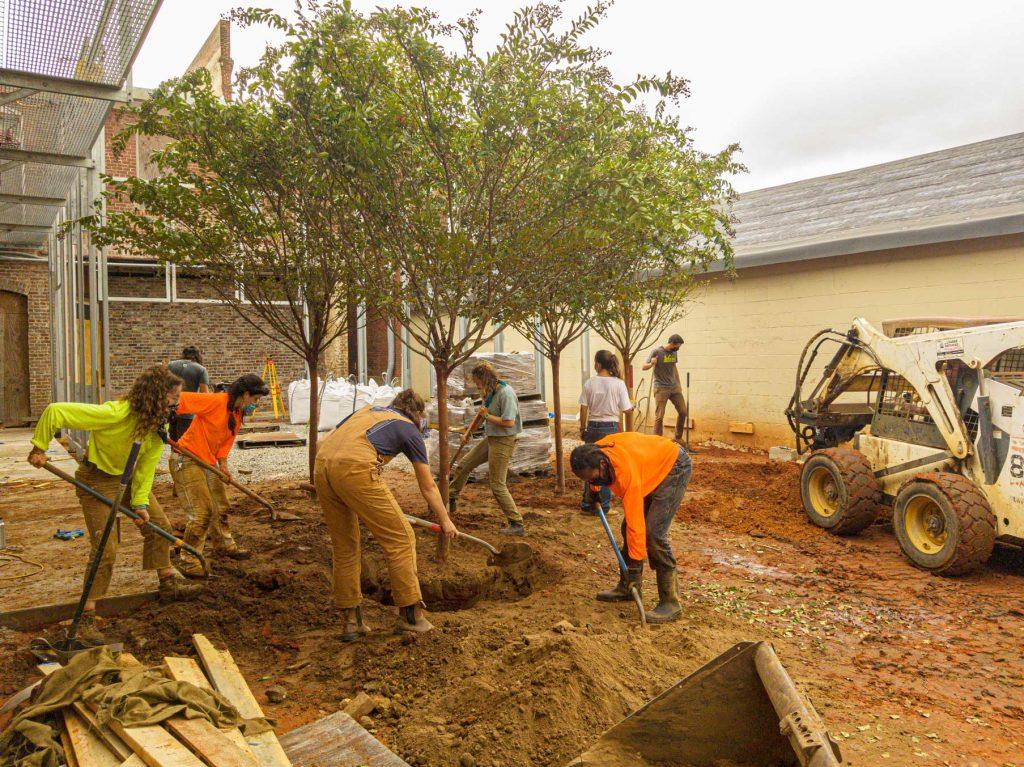 Students planting fourth tree