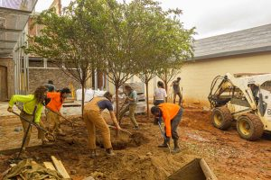 Students planting fourth tree