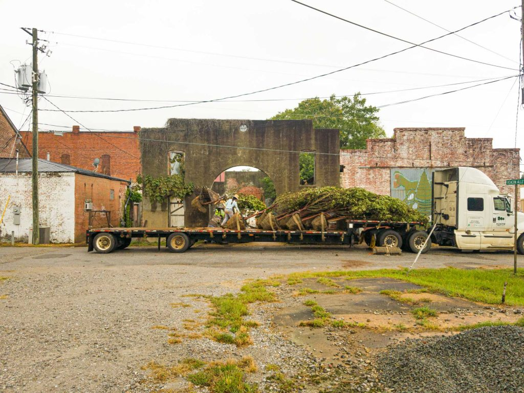 Trees on a delibery truck