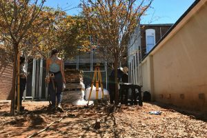 newly planted crepe myrtle trees caste speckled light on students
