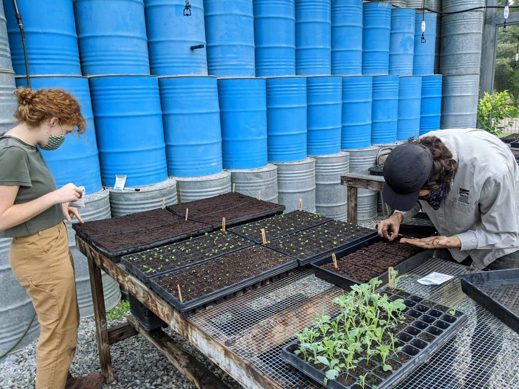 Two students plant crop seeds into newly prepared soil blocks and seedling trays in the seed house