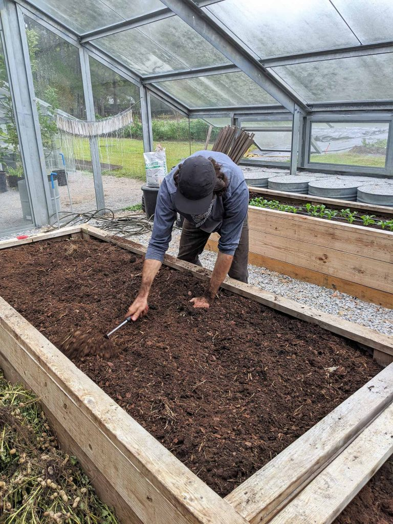 A student mixes amendments into a raised bed in the greenhouse, preparing it for transplants