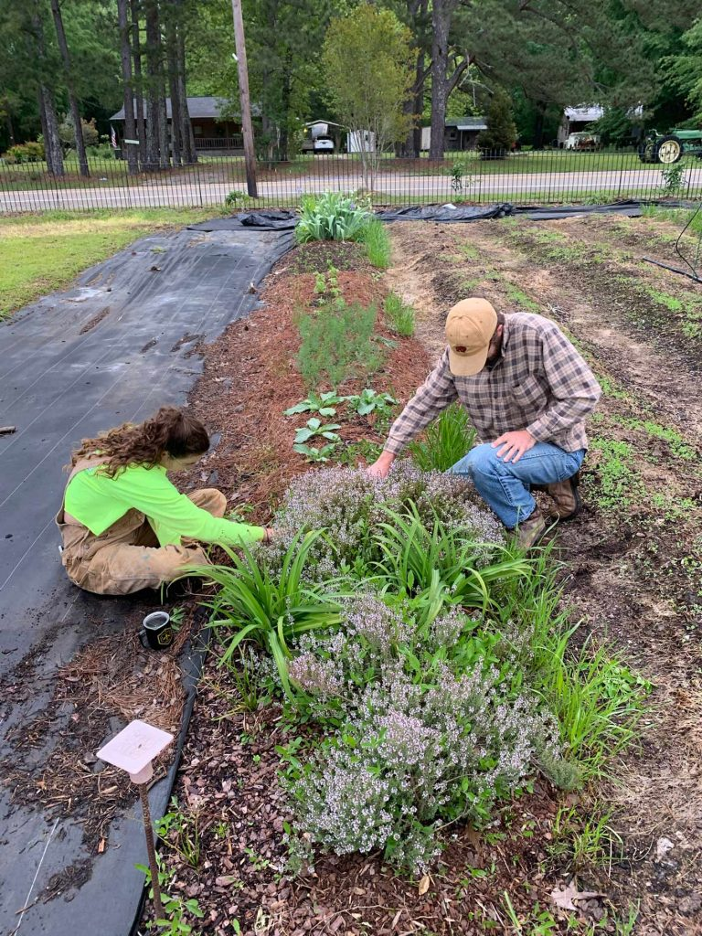 Students hand weed around some of the perennial herbs and flowers