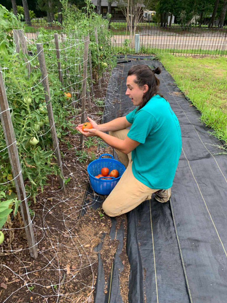 A student looks mock reverent as he clutches a recently harvested ripe tomato