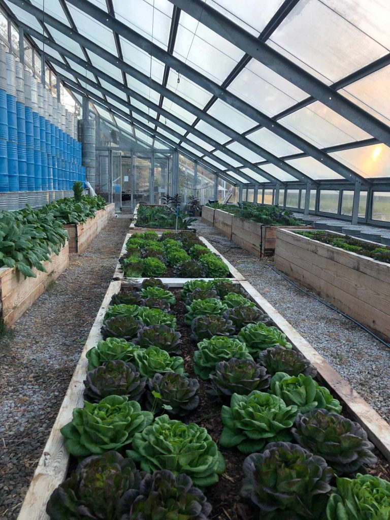 A long shot of the greenhouse, showing several beds of multicolored salanova lettuce heads