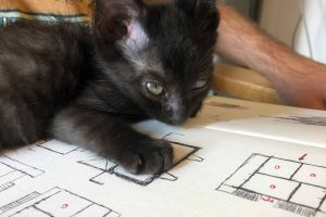 Black cat reviewing students drawings.
